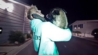 Download EMOTIONAL REUNION WITH APOLLO AFTER HE RAN AWAY... Video