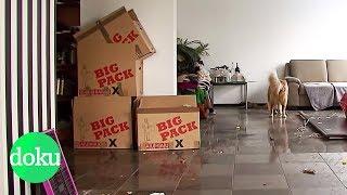 Download Zwangsräumung - Eine Familie kämpft um ihr Haus   WDR Doku Video