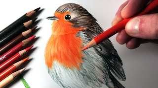 Download How to Draw a Robin Video