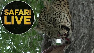 Download safariLIVE - Sunset Safari - July 21, 2018 Video
