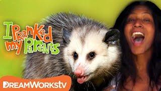 Download Possum Rescue | I PRANKED MY PARENTS Video