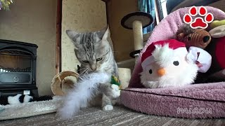 Download Cats room Miaou December 8 2016 Video