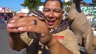 Download Dream Center Reptiles Living the Dream Video