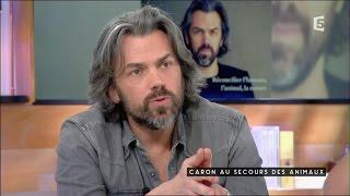 Download Caron au secours des animaux - C à Vous - 25/04/2016 Video