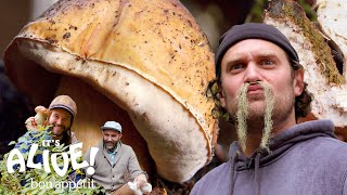 Download Brad Forages for Porcini Mushrooms | It's Alive | Bon Appétit Video