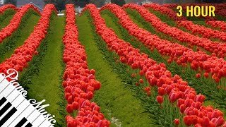 Download 3 HOURS Relaxing Piano Music #93 - Tulip Fields - Calming Music for Studying, Focus & Relaxatio Video