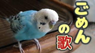 Download インコが作った替え歌 【ゴメンの歌】 Video