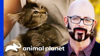 Download Jackson Galaxy Is On A Mission To Rehome 50 Adorable Kittens! | My Cat From Hell Video
