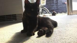 Download 家に入ってきた野良猫とその親猫 Video