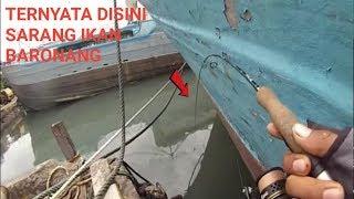 Download Rabbitfish on ultralight fishing( mancing baronang) 2 Video