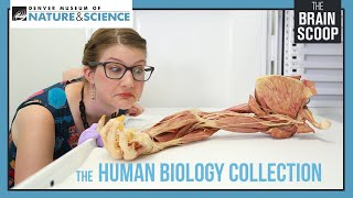 Download The Human Biology Collection Video
