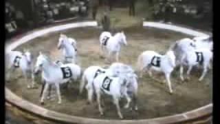 Download Bemerkungen über das Pferd im Zirkus Video
