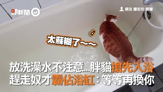 Download 放洗澡水不注意...胖貓搶先入浴 趕走奴才霸佔浴缸:等等再換你 Video