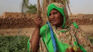 Download La MINUSMA aux côtés des femmes maraichères de Kidal Video
