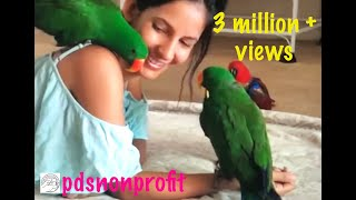Download Aeriana and her eclectus family... Fourth of July special Video