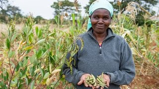 Download Food For Life - Ecological Farming in Kenya Video