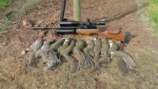 Download Pest Control with Air Rifles - Sniper Cam Squirrel Shooting - Pleasant Peasant Pheasants Video