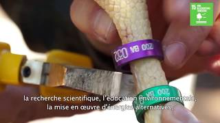 Download La réserve de biosphère de Ñacuñán met en œuvre les Objectifs de développement durable (Argentine) Video