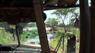Download Kilimanjaro Safari at Walt Disney World's Animal Kingdom Video
