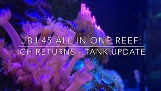 Download JBJ 45 All In One Reef: ICH Returns - Tank Update Video