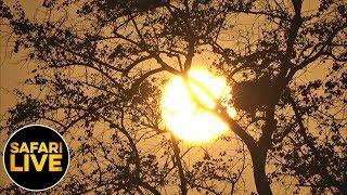 Download safariLIVE - Sunrise Safari - September 02, 2019 Video
