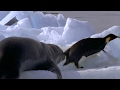 Download Leopard Seal Kills Emperor Penguin - Blue Planet - BBC Earth Video