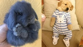 Download Funny Animals Doing Funny Things.Best Funny Compilation Video