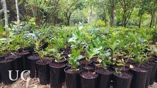 Download UC.Plantas: Adotar uma planta pela diversidade Video