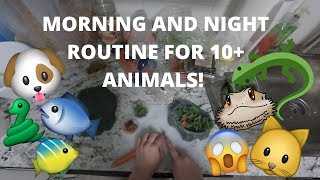 Download PET MORNING AND NIGHT ROUTINE 2018! | Reptiles, Fish, Amphibians and all that jazz Video