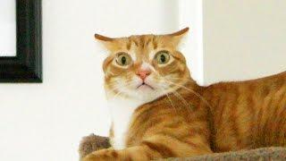 Download Understanding Your Cat's Emotions Video