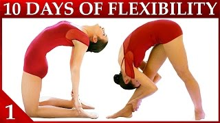 Download 10 Day Flexibility Challenge Day 1 – Basic Stretches & Warmup Workout Dance with Catherine Video