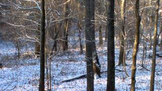 Download Deer Hunting in Haywood County TN Two Does Walk By Then a Buck on the Trail Video