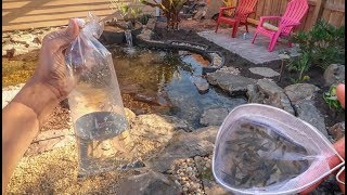 Download FISH for my NEW POND!! Video