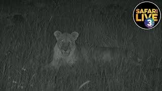 Download safariLIVE on SABC 3 S2 - Episode 13 Video