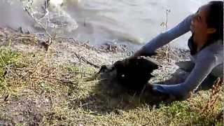 Download Como atrapar a un pato Video