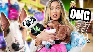 Download Buying My Dog Everything He Touches Video