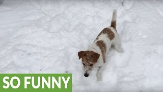 Download Dog clearly in doggy heaven with heavy snowfall Video