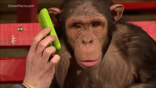 Download Monkeys react to magic Video