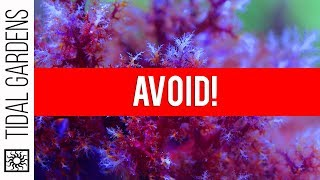 Download The Top 5 Corals to AVOID Video