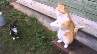 Download Русские коты ))) Video