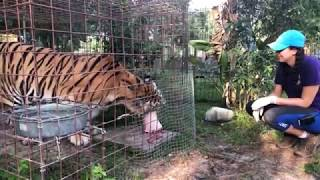 Download Q&A w/ Brittany @BigCatRescue and a Special Birthday Boy! Video