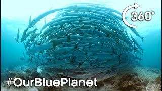 Download 360° Barracuda Tornado #OurBluePlanet | Earth Unplugged Video