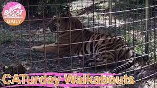 Download Caturday Walkabout 12 07 19 Video