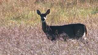 Download 2016-17 Missouri Deer Hunting Season - Potential Regulation Changes Video