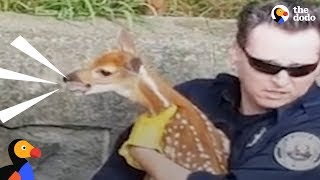 Download Crying Baby Deer Reunited With His Mom | The Dodo Video