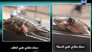 Download #انتباه : ازاي تفرق بين السمك المتغذي علي السبلة والسمك المغذي علي الأعلاف Video