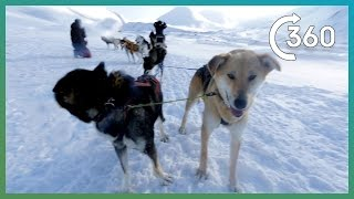 Download Epic 360° Husky Sledding In Svalbard! | Earth Unplugged Video
