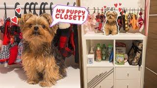 Download Building My Dog A Closet - DIY Video