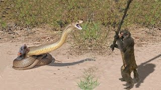 Download LIVE: Snake vs Porcupine, Elephants & Crocodiles - Real Fight attacks - Wild Discovery Animals Video