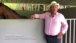 Download Sr. David Valle- Montador Profesional Video